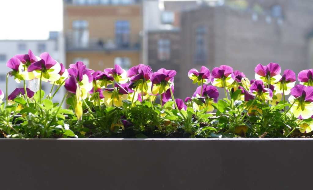 balcone fiorito spendendo poco