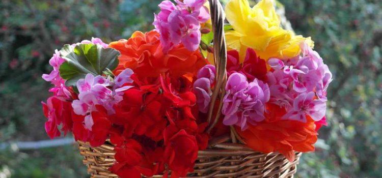 Come avere un balcone fiorito spendendo poco